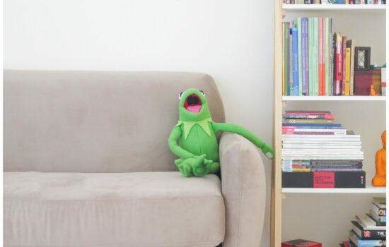 Green frog in the budoir